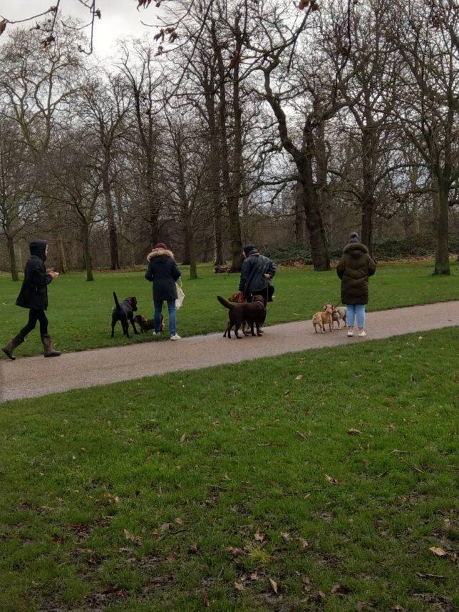 ハイドパークの愛犬家たち。
